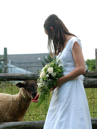 Bride with sheep at fence